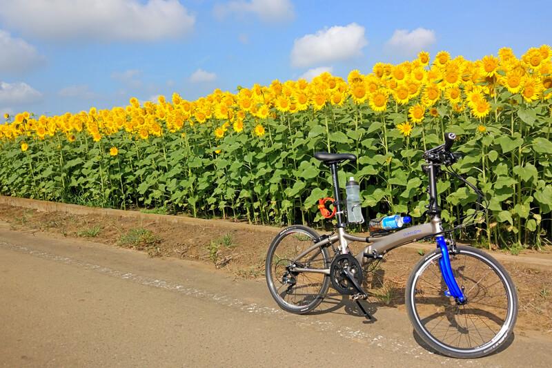 真夏のサイクリングは早朝に出発