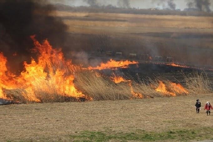 渡良瀬遊水地のヨシ焼き、燃え上がる火柱