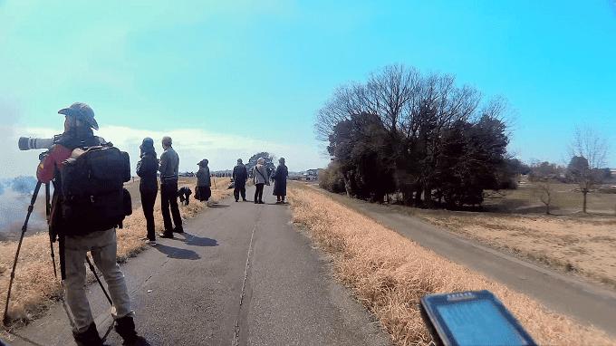 渡良瀬遊水地、ヨシ焼きの時のサイクリングロードの人混み