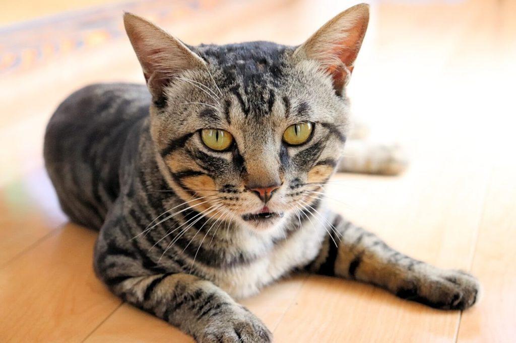 一眼レフカメラ、EOS Kiss X9の作例、猫