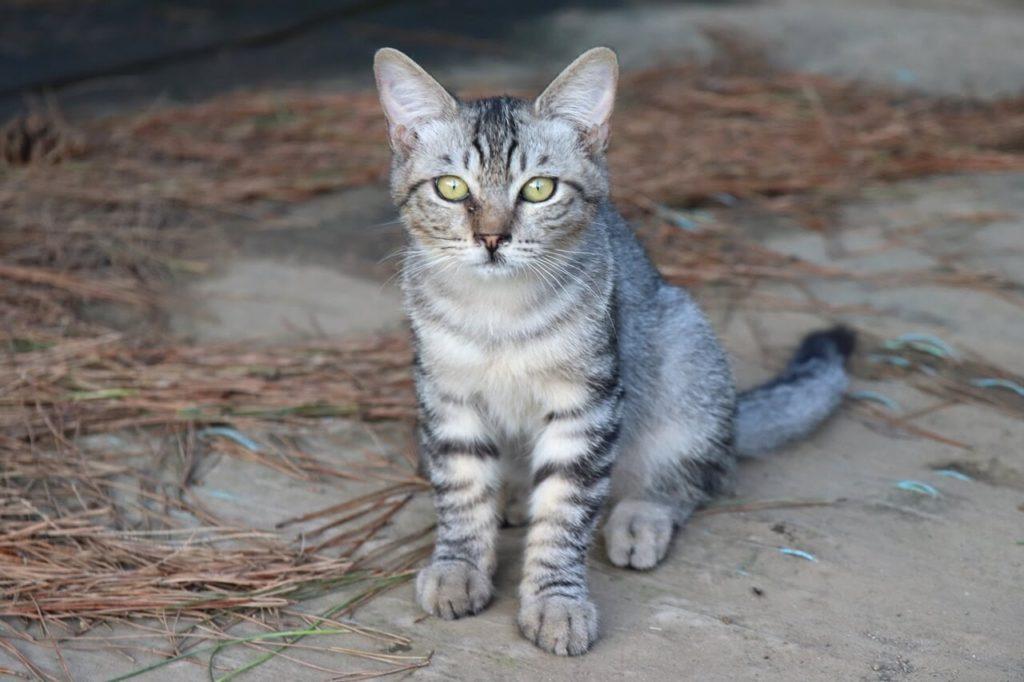 一眼レフカメラ、EOS Kiss X9の作例、猫が座っている