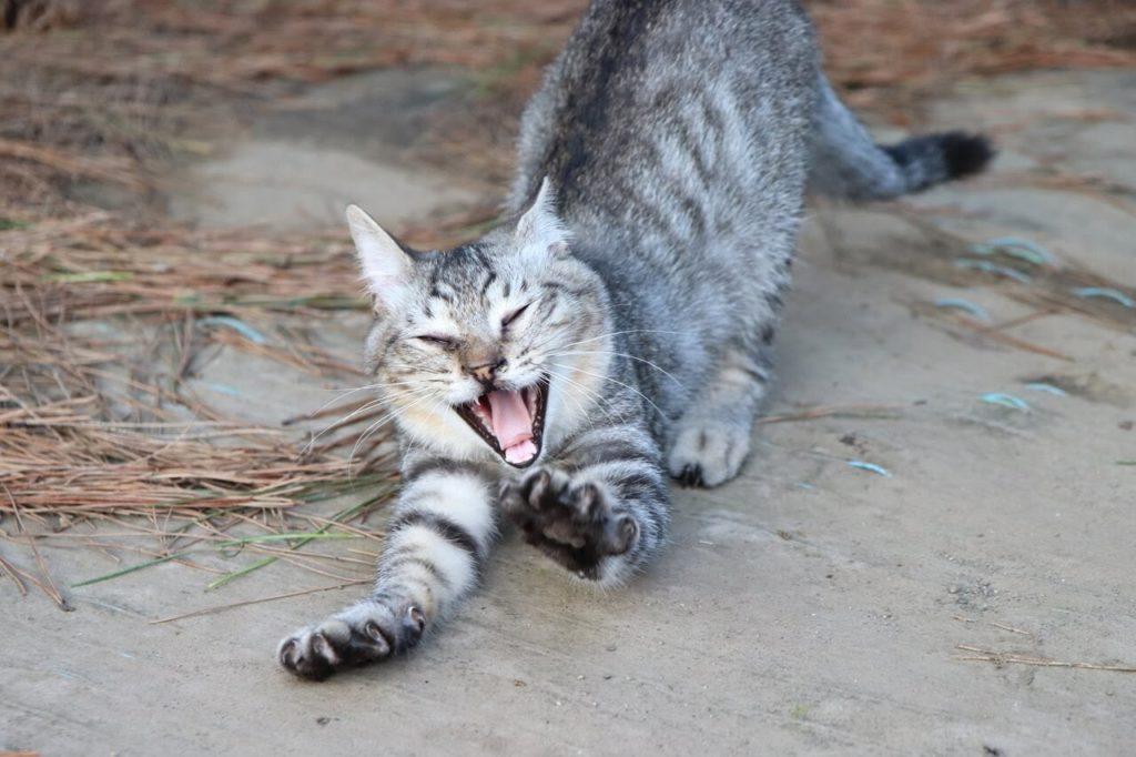 一眼レフカメラ、EOS Kiss X9の作例、猫が背伸びしている