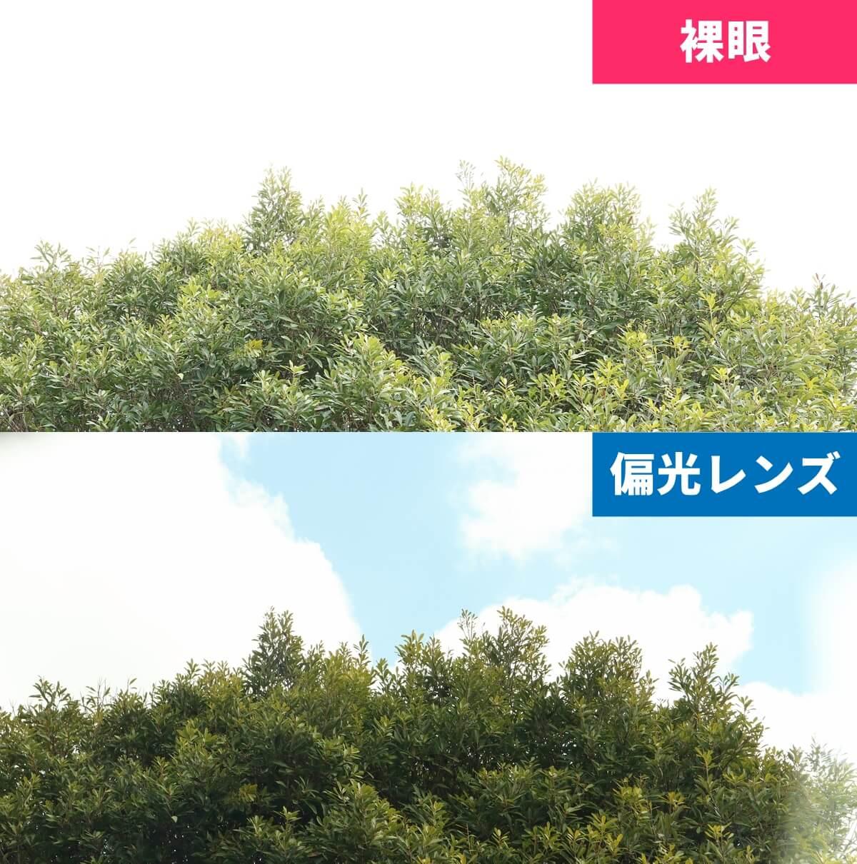 偏光レンズで見える風景、ありなし比較